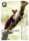 "by Jenny Hibbert, Wales, titled: ""Pine Marten up a Branch""Robert Mawer ARPS titled 'Spatial Awareness'"