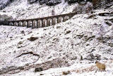 Sheep  -  Glenogle Viaduct, Stirlingshire