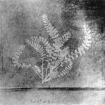 Shadowgraph of a leaf fern produced by Talbot in 1836