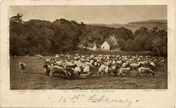 Post Card - Evening Meal, Swanston - By James Patrick