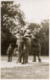 Jerome postcard  -  Date not known  -  Elephant
