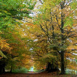 The Driveway to Arniston House  -  October 2010