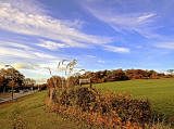 Corstorphine Hilll  -  Photographed October 2010