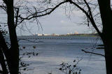 View of Leith Western Harbour through the trees from the Dalmeny Estate  -  November 2005