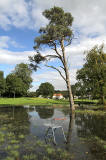 Scots Pine Tree in the flooded area  -  5 September 2012