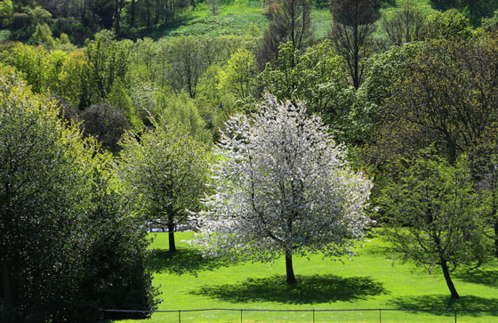 West Princes Street Gardens  -  Sprng Sunshine and Trees