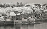 Infra-red Photo  -  South Queensferry  -  June 2014