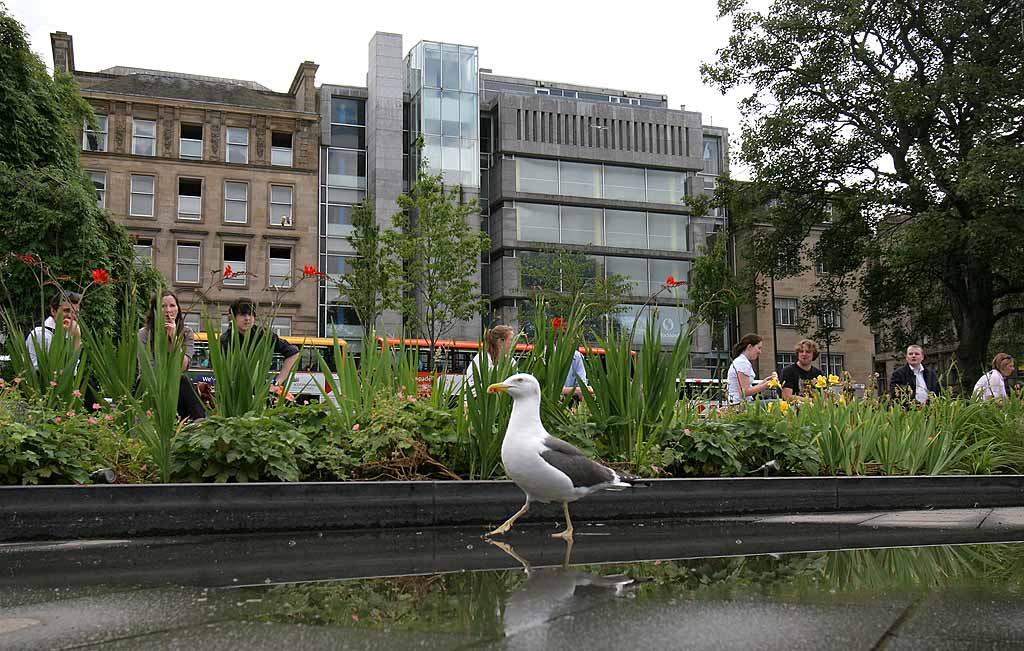 St Andrew Square Gardens And Seagull July 2009