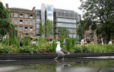 St Andrew Square Gardens and seagull  -   July 2009