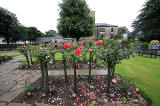 Warriston Crematorium Rose Garden