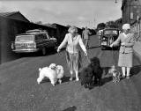 Dogs arrive at Waverley Market for the Dog Show in 1957