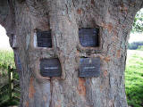Memorial Plaques to Tom Curr and others, embedded in a tree at Lilliesleaf, near Melrose, in the Scottish Borders