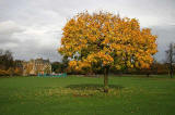 Tree near the SW corner of Inch Park