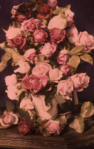 Autochrome - flowers