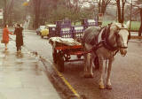 St Cuthbert's Milk Horse and Cart - Melville Drive 1976