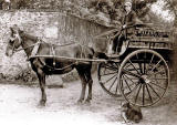 John Waldie Jun. and his horse and milk cart at Comiston Dairy