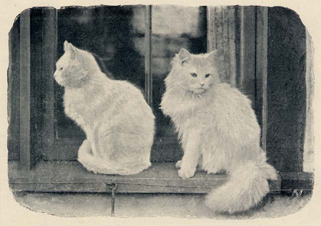 The Cats' Corner  -  Photograph by Charles Reid, published in The Practical Photographer, 1895