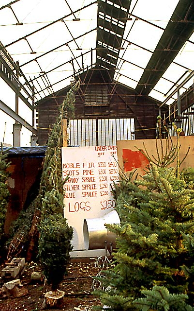 Christmas Tree Warehouse at Canonmills  -  December 1995