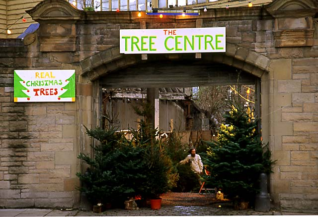 Christmas Tree Warehouse At Canonmills