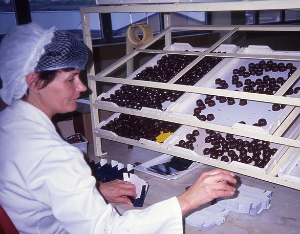 Duncan's Chocolate Factory  -  Beaverhall Road, Edinburgh,  1991  -  A worker putting selections of chocolates into boxes