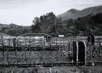Scottish Railway Stations  -  Crianlarich  -  26 June 2005